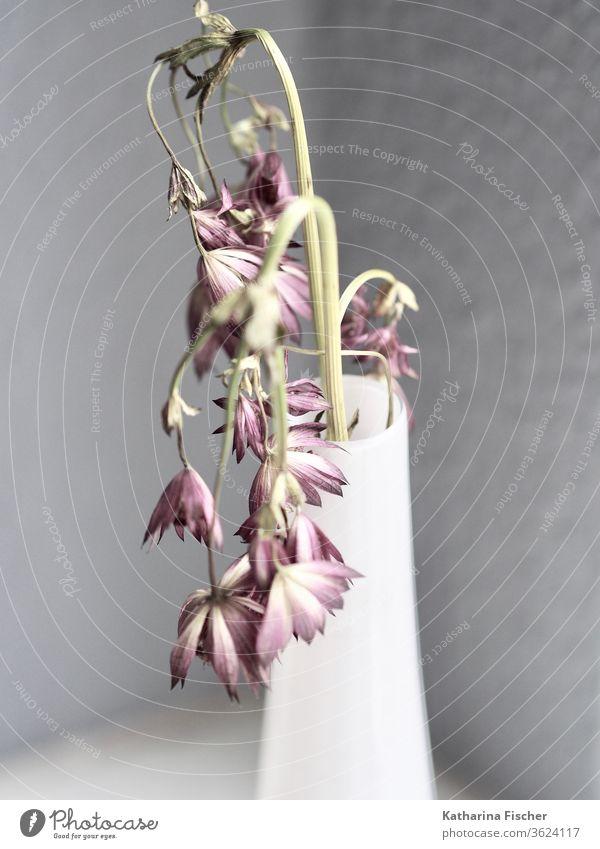 Die Zeit vergeht, Feldblumen in weißer Vase Natur Sommer Innenaufnahme Dekoration & Verzierung Blumen Vase mit Blumen einfach Stil stylisch grau delayednet