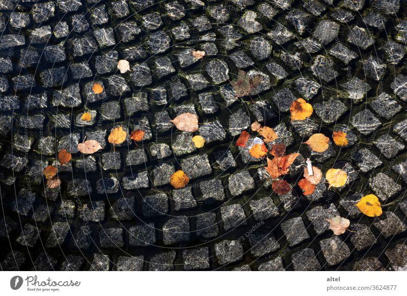 Herbstzeit Laub Brunnen Zigarettenkippe goldener herbst Sonnenschein Müll Blätter Spiegelung Wasser Herbstlaub Licht Farbfoto Pflanze Außenaufnahme Park Natur