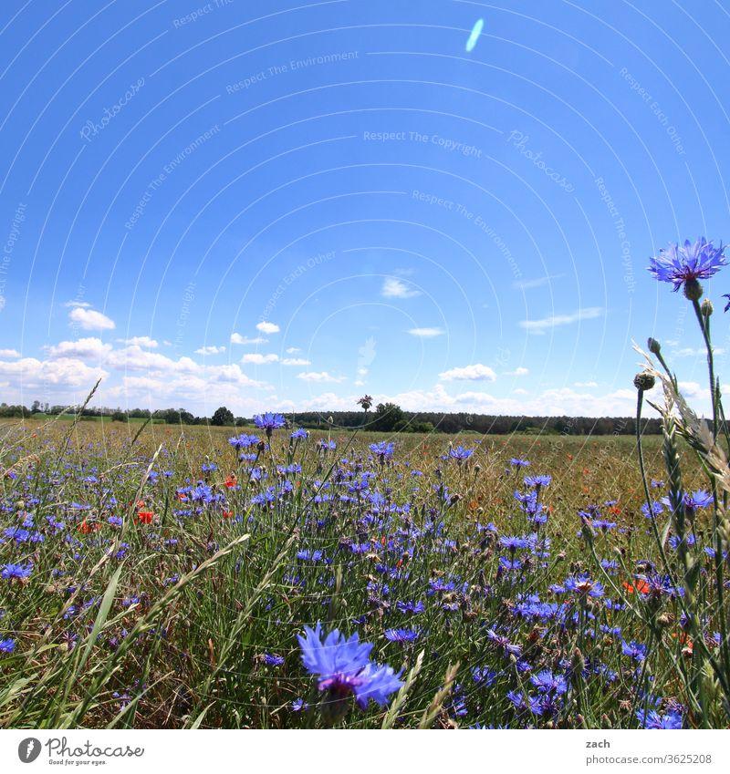 7 Tage durch Brandenburg - noch ´n Korn Feld Ackerbau Landwirtschaft Gerste Gerstenfeld Getreide Getreidefeld Weizen Weizenfeld gelb blau Himmel Wolken Kornfeld
