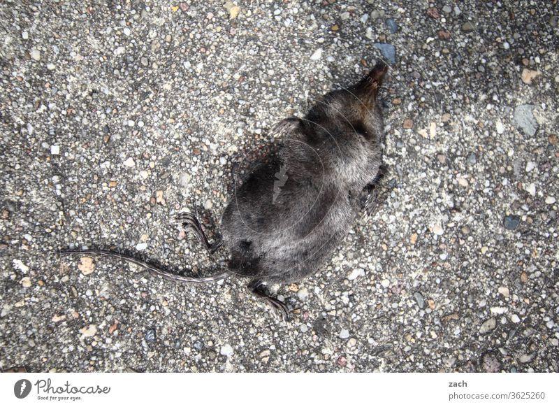 7 Tage durch Brandenburg - letze Reise alt Verfall Vergänglichkeit Tier Maulwurf Tod sterben Totes Tier tot Wege & Pfade Straße Asphalt Radweg liegen