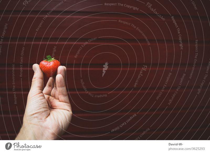 Hand präsentiert die perfekte Erdbeere vor neutralem Hintergrund Erdbeerzeit Frucht Leckerbissen schön Beerenfrucht obstsorten Obsttorte ertrag ertragreich