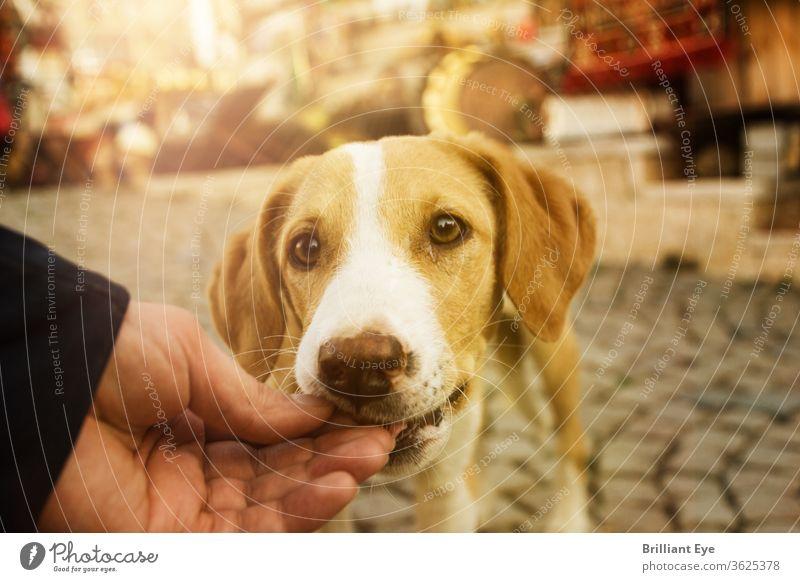 hungrigen Hund mit der Hand füttern außerhalb jung Natur schön modern Lifestyle Mann Tier schließen nach oben Haustier Therapie im Freien Hintergrund