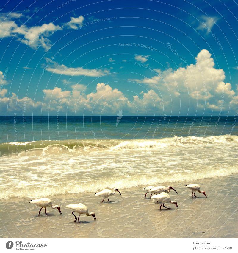 Muschelsammler Himmel Natur Ferien & Urlaub & Reisen Wasser Sommer Sonne Meer Tier Wolken Strand Umwelt Ferne Wärme Küste Freiheit Vogel