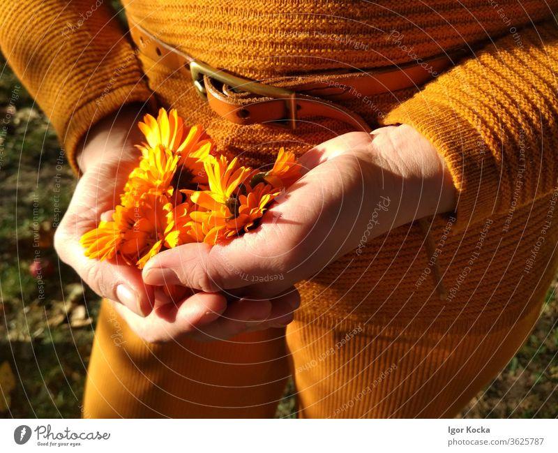 Nahaufnahme einer Frau, die Orangenblüten hält Blume orange Farbe Hände Sonnenlicht Beteiligung zerbrechlich verwundbar filigran Pflanze Blüte