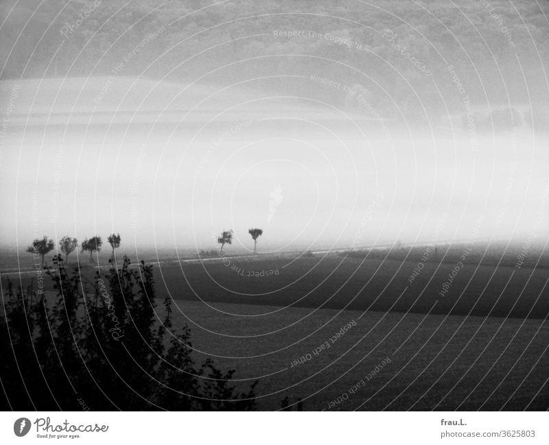Die jungen Bäume bei den Feldern sahen erschrocken zu, wie der Wald langsam im Nebel verschwand. Landschaft Acker Busch Dorf Degersen