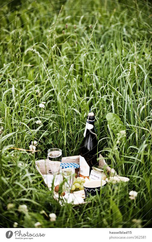 picknik Natur Ferien & Urlaub & Reisen Pflanze Sommer Sonne Erholung Landschaft ruhig Tier Freude Ferne Umwelt Leben Essen Gras Glück