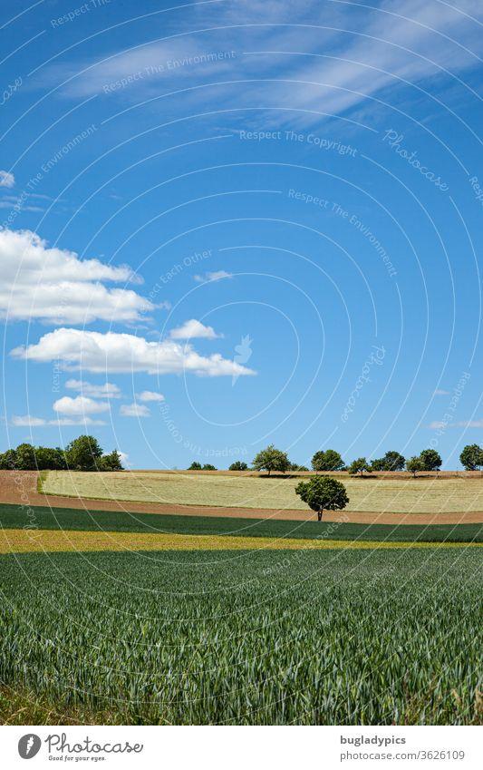 Landschaft mit Feldern in verschiedenen Farben (grün, gelb, braun) die einen bogenförmigen Verlauf haben. Zwischen den Feldern steht ein einzelnenr Baum. Weiter am Horizont noch mehr Bäume. Der Himmel ist blau. Es gibt einzelne Wolken.