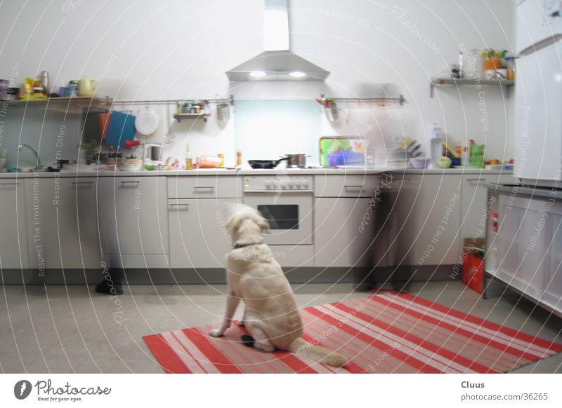 Schnelle Küche Hund kochen & garen Langzeitbelichtung Geschwindigkeit Ernährung Mensch