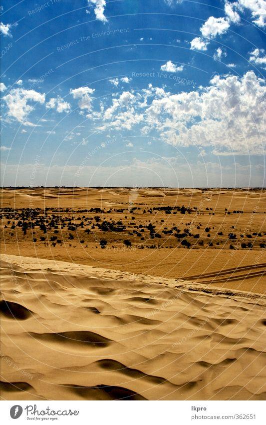 Düne in der Sahara-Wüste und etwas Buschland Natur Sand Wolken Hügel Linie braun schwarz weiß Einsamkeit Farbe Tunesien wüst Wasser winken hell-blau Holz Buchse