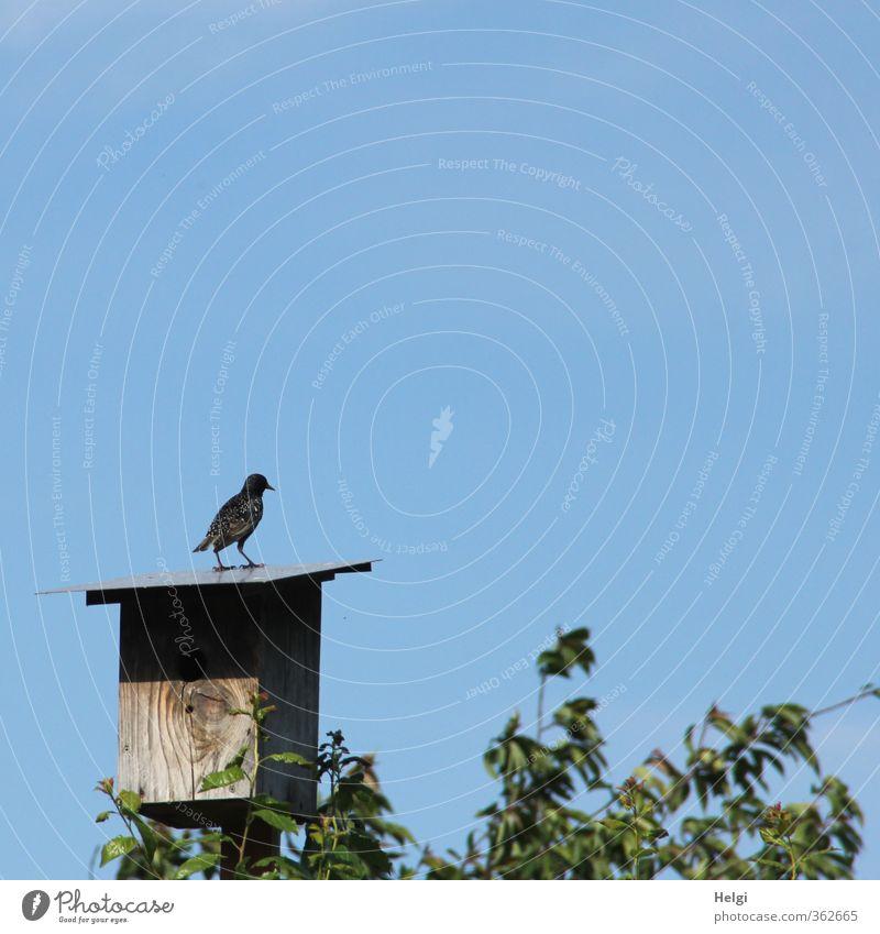 AST6 Inntal | Nußdorfer Star... Umwelt Natur Pflanze Himmel Wolkenloser Himmel Frühling Schönes Wetter Baum Blatt Garten Tier Wildtier Vogel 1 beobachten Blick