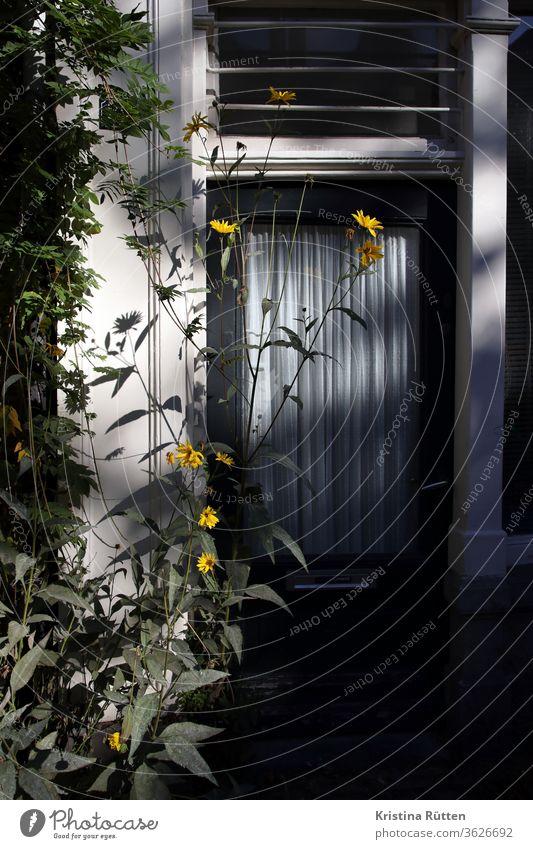 gelbe blume im licht und schatten vor der haustür pflanze blüten blümchen blühen draußen eingang zuhause wohnen leben natur wachsen silhouette vorgarten grün