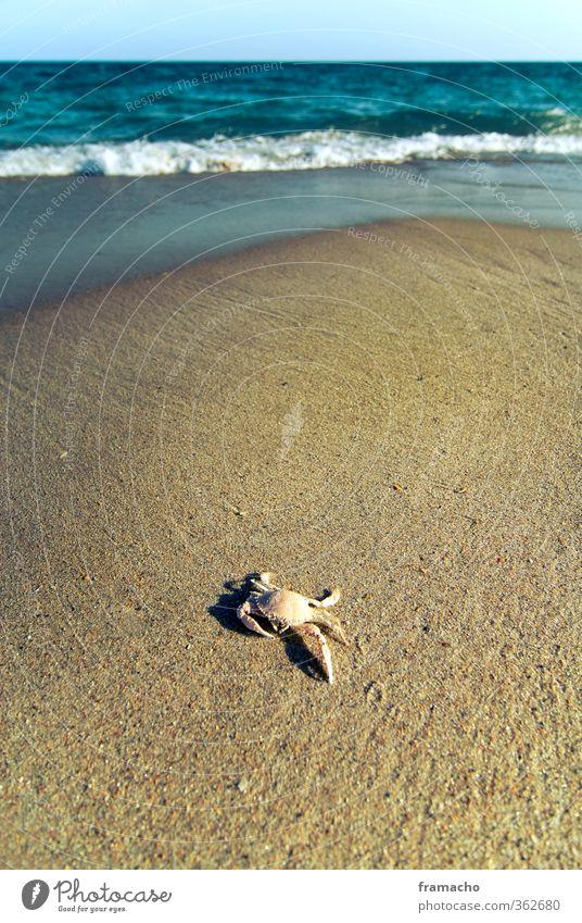 Crab Freizeit & Hobby Ferien & Urlaub & Reisen Sommer Sommerurlaub Strand Meer Wellen Natur Landschaft Tier Sand Wasser Wolkenloser Himmel Horizont Sonnenlicht