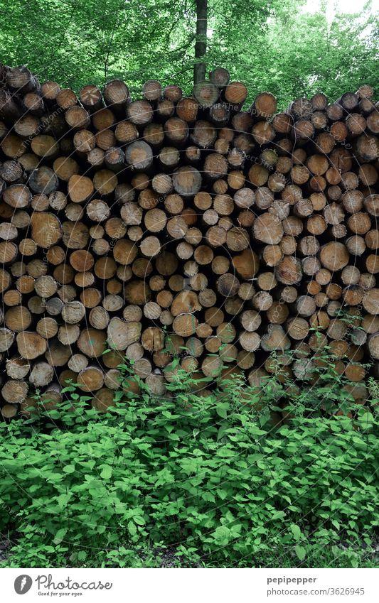 abgesägte Baumstämme im Wald baumstämme Natur Außenaufnahme Umwelt Farbfoto Landschaft Menschenleer Tag Pflanze Herbst Bäume Baumstamm Holz Brennholz Holzlager