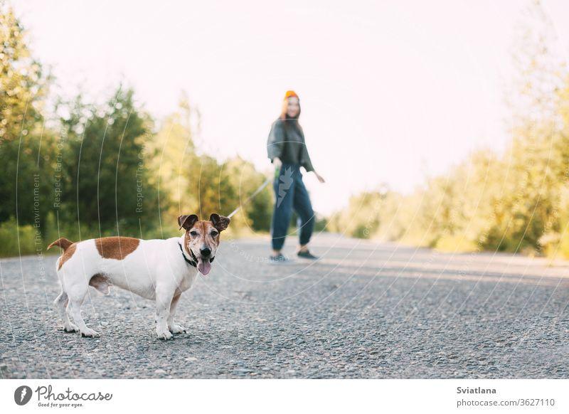 Modernes Teenagermädchen geht mit ihrem Hund in der Natur spazieren. Haustier, Pflege, Freundschaft. Unscharfer Hintergrund, Park jung laufen Frau Tier Mädchen