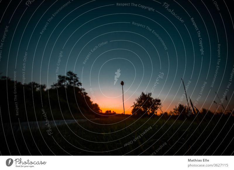 Abendstimmung Natur Thüringer Wald Erholung Umwelt grün schön Himmel Schönes Wetter Landschaft Freiheit Ferne Sonnenlicht Ferien & Urlaub & Reisen wandern
