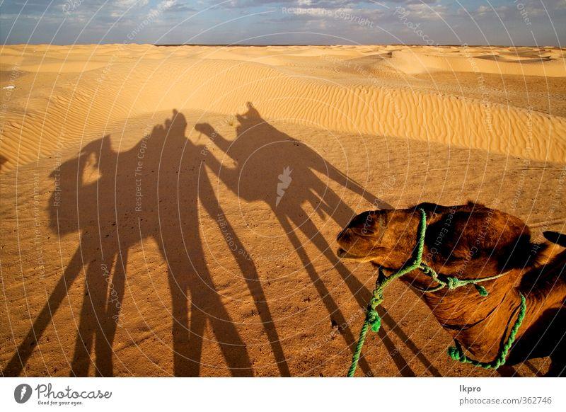 grün weiß rot Wolken schwarz gelb grau Sand braun Düne Pfote Sahara Tunesien