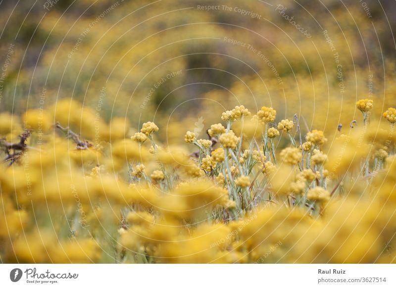Satz gelbe Blumen, Wiese voller Farbe Sonnenschein geblümt hell Sonnenlicht Herbst blau grün Kraut rot Landschaft Pflanze sonnig Natur Frühling Szene Gras Baum
