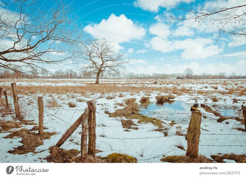 Frühling Natur Landschaft Erde Wasser Himmel Wolken Horizont Winter Schönes Wetter Eis Frost Schnee Baum Gras Moos Wiese Feld kalt natürlich blau braun weiß