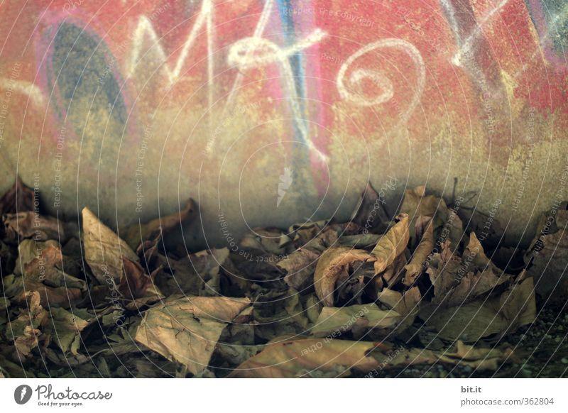 Großstadtherbst Blatt Umwelt Graffiti Wand Herbst Mauer Garten Stimmung Kunst Fassade dreckig Häusliches Leben Ecke Wandel & Veränderung Trauer trocken