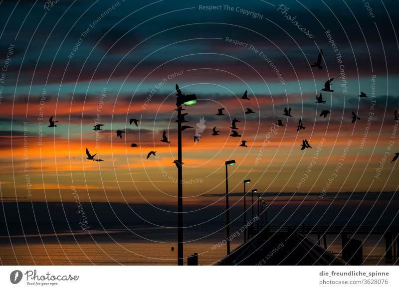Die Vögel am Meer Ostsee Sonne Sonnenaufgang Timmendorfer Strand Sonnenuntergang Dämmerung Farbfoto Außenaufnahme Ferien & Urlaub & Reisen Wasser Horizont
