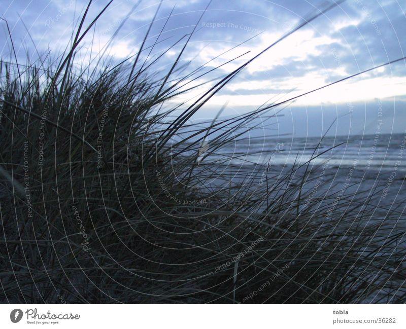 Abendstimmung Hiddensee Strand Dünengras Blick aufs Mee Stranddüne Ostsee Spätherbst
