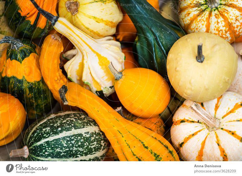 bunte Zierkürbisse, Kürbisse und Kürbisse auf dem Markt Varieté fallen farbenfroh Lebensmittel Herbst Gemüse Halloween Squash weiß grün gelb frisch orange