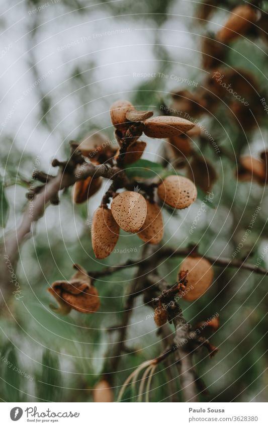 Mandeln zumachen Mandelbaum Muttern Nut Ernährung Diät Zutaten Frühstück frisch natürlich Textfreiraum Lebensmittel Löffel Schalen & Schüsseln Snack Gesundheit