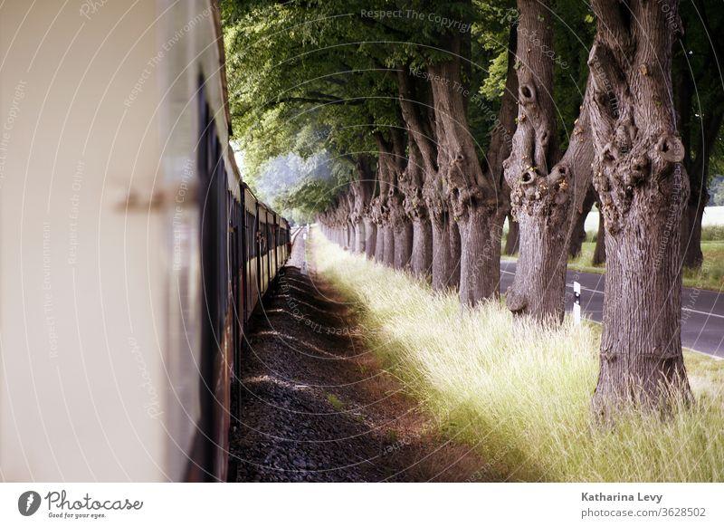 Mollyfahrt an der Ostsee molly Bahn Zug Zugfahrt Bahnfahrt Allee Alleebäume fahren Urlaub Straße Straßenverkehr Waggon Reise Schatten