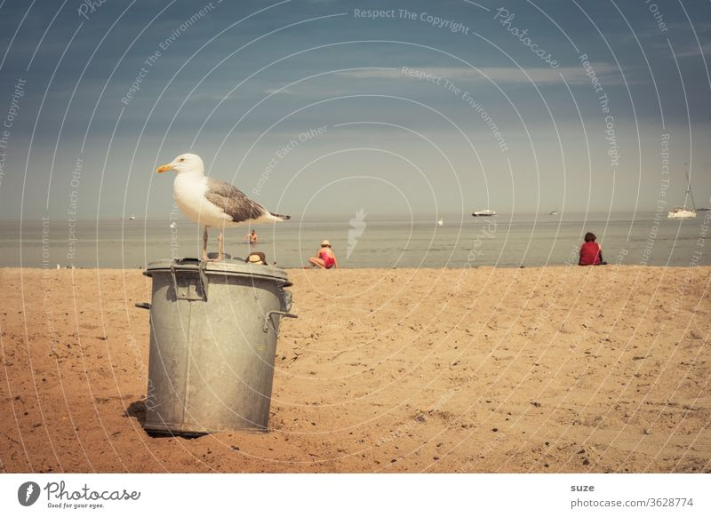 Besetzter Restposten - objektive Möwe am Strand ruhig Natur Tier Küste Meer Sand Ostsee Wildtier Vogel stehen warten Sehnsucht Fernweh Urlaub Tourismus