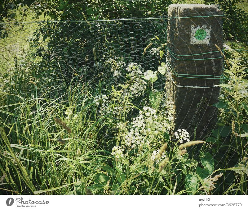 Alte Wegmarke Stein Pfosten Wanderweg Zeichen Hinweis Punkt grün Grüner Punkt Zaun Draht Drahtzaun eng engmaschig Schutz Barriere Begrenzung Gras Pflanzen