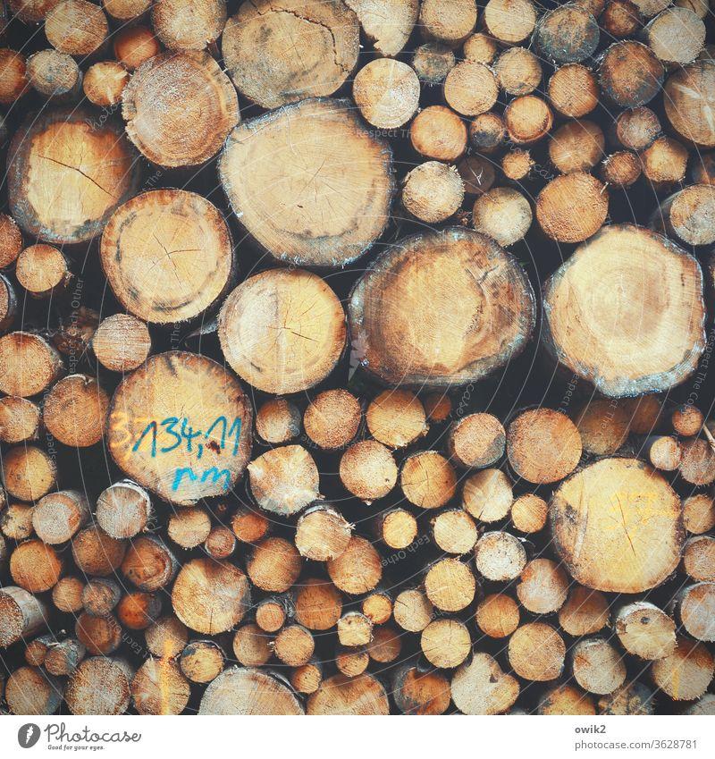 Eine Frage der Abstammung Baumstämme Holz viele gestapelt Stapel hoch schwer unterschiedlich Außenaufnahme Farbfoto Menschenleer Tag Detailaufnahme Natur