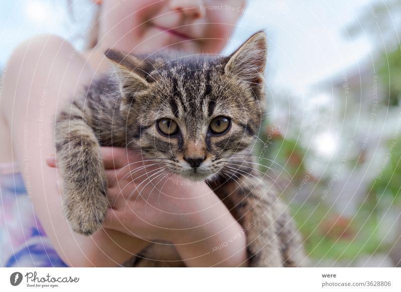 ein kleines Katzenbaby auf dem Arm eines kleinen Mädchens jung Jungtier Tier Babykatze Kind kuschlig kuschelig weich niedlich Fell Halt menschlich wenig
