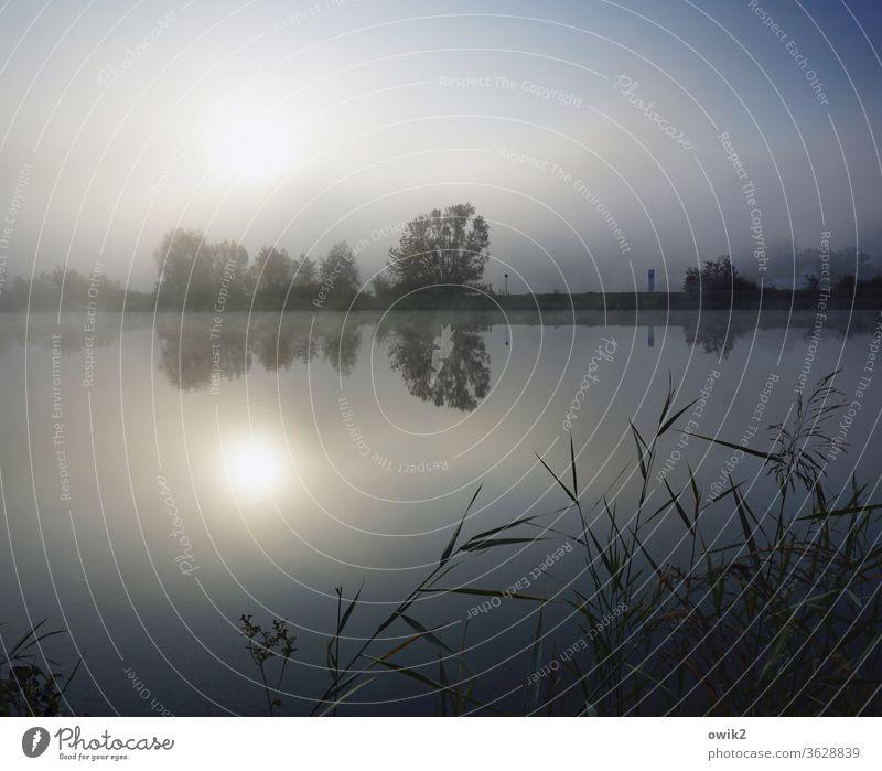 Donaumorgen Fluss fließen Stille Ruhe windstill Wasser Natur Landschaft Außenaufnahme Farbfoto Menschenleer Idylle ruhig Reflexion & Spiegelung morgens