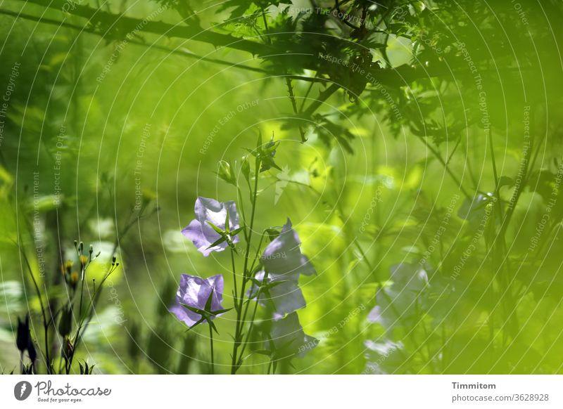 Des Hobbygärtners Paradies Gärtner Gärtnerei Folie grün Pflanze Blüte Gartenarbeit Vielfalt Natur Freizeit & Hobby