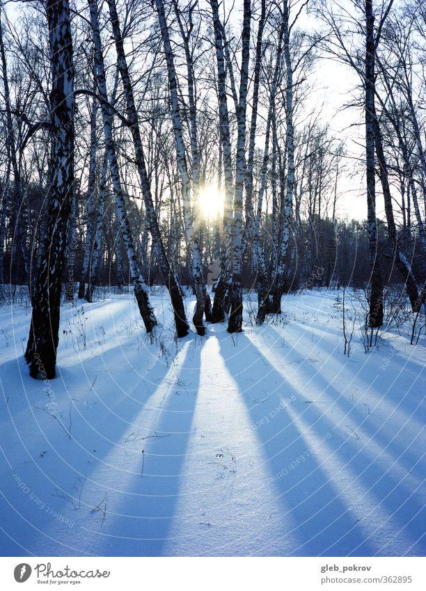 Doc# Kalt-Sonne Natur Landschaft Pflanze Himmel Sonnenaufgang Sonnenuntergang Sonnenlicht Winter Klimawandel Wetter Schönes Wetter Eis Frost Schnee Baum Wald