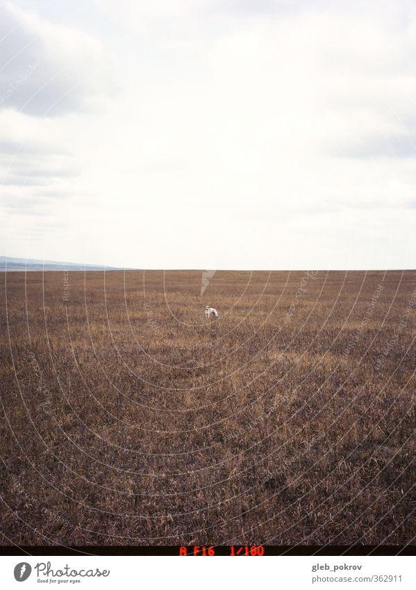 Hund Himmel Natur Landschaft Freude Tier Wolken Frühling Spielen Horizont Feld stehen einzigartig gut stark Jagd