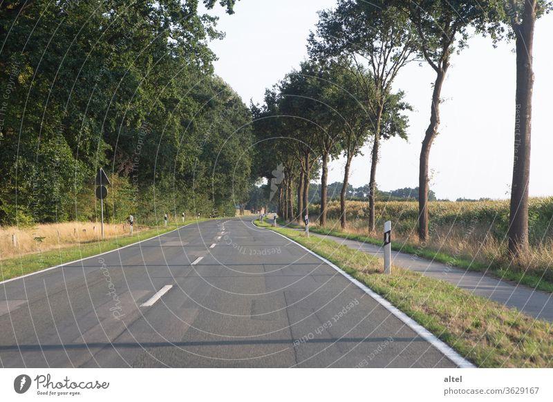 Es führt ein Weg nach Nirgendwo Landstraße Roadtrip Sommer Ausflug leer Einsamkeit Mittelstreifen Zukunft Hoffnung Unendlichkeit Baum Freiheit Verkehrswege Tag