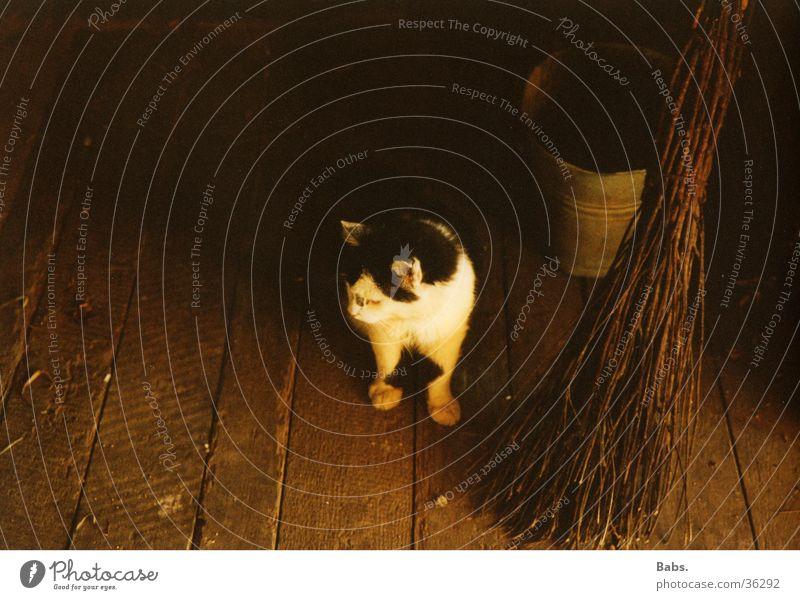 Bauernhofkatze Katze Stimmung Bodenbelag ländlich Eimer Besen Kübel