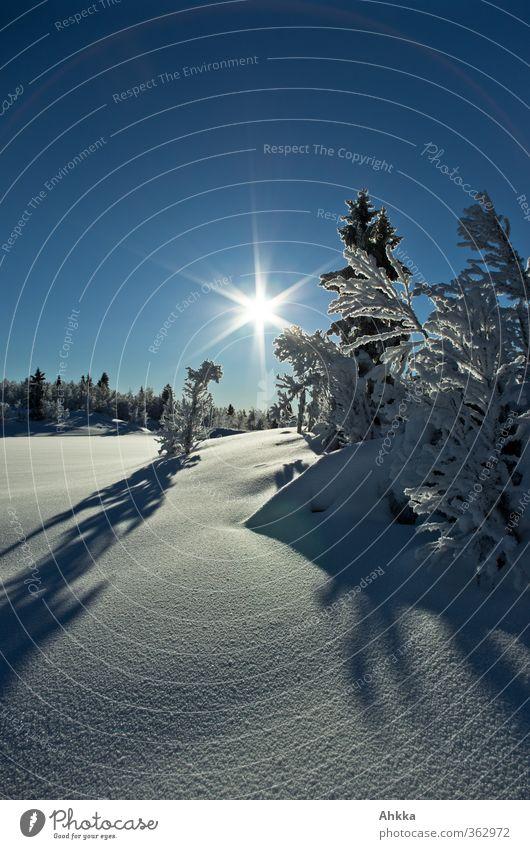 Gegenlichtaufnahme in unberührter Winterlandschaft Norwegens Himmel Sonne Baum Landschaft ruhig Berge u. Gebirge Schnee Freiheit Glück Stimmung Kraft Klima