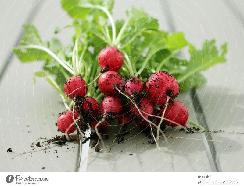 scharf & knackig Lebensmittel Gemüse Ernährung Essen Freizeit & Hobby Wohnung Garten grün rot Radieschen Scharfer Geschmack Gartenarbeit Erde Aussaat Ernte