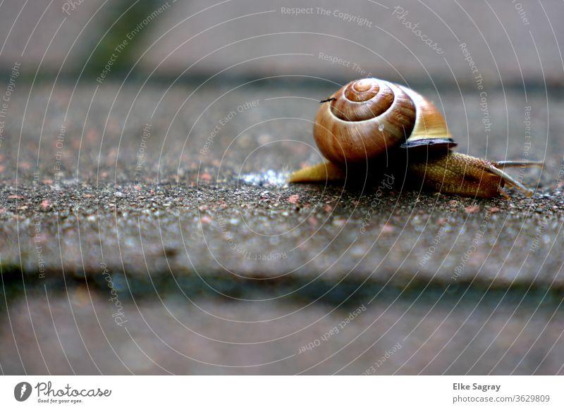 Schnecke kreuzt meinen Weg... Weichtier Natur Außenaufnahme langsam Geschwindigkeit