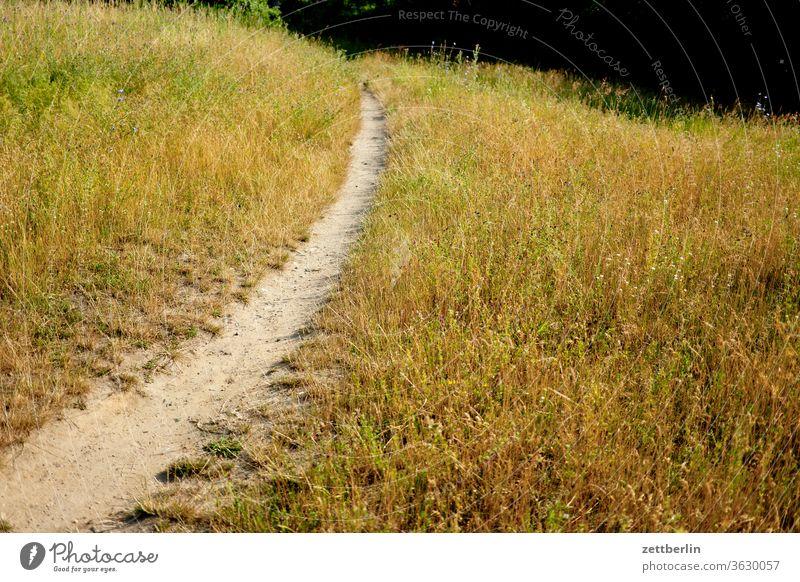 Trampelpfad ausflug wiese ferien gras natur rasen urlaub wachstum wandern wanderweg kurve spaziergang trocken trockenheit sommer