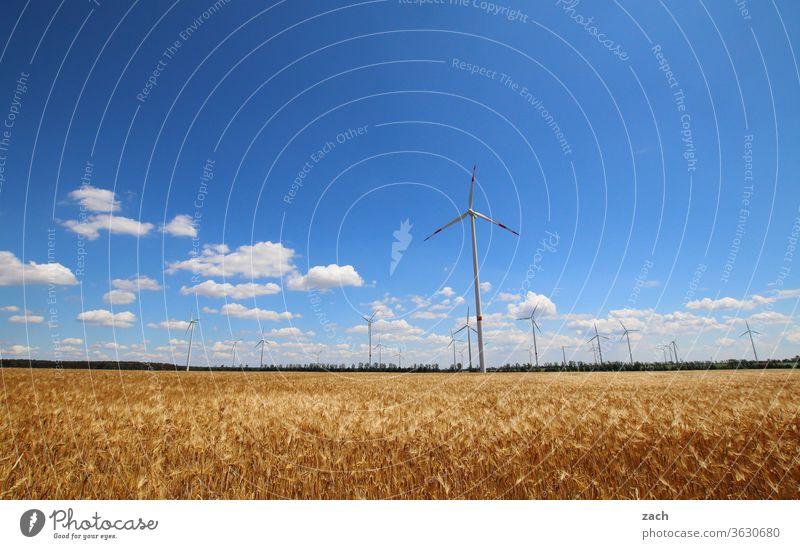 7 Tage durch Brandenburg - Windmaschinen Feld Ackerbau Landwirtschaft Gerste Gerstenfeld Getreide Getreidefeld Weizen Weizenfeld gelb blau Himmel Blauer Himmel