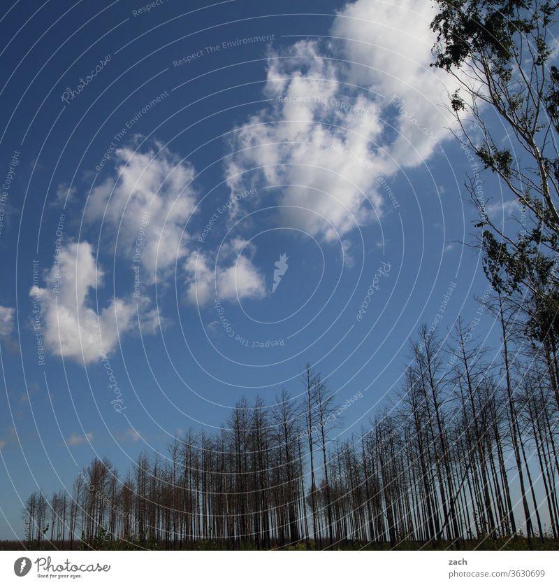 7 Tage durch Brandenburg - abgebrand in Brandenburg brennen Waldbrand Zerstörung Vergänglichkeit Verfall Natur Feuer bedrohlich Dürre Baum Pflanze Brandstiftung