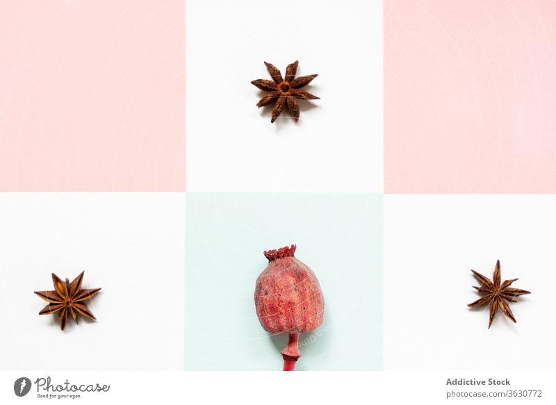 Sammlung von Sternanis und Hagebutte am Stiel Hagebutten Anis Bestandteil Gewürz Aroma natürlich Gesundheit Produkt Vegetarier exotisch Frucht kreativ Design