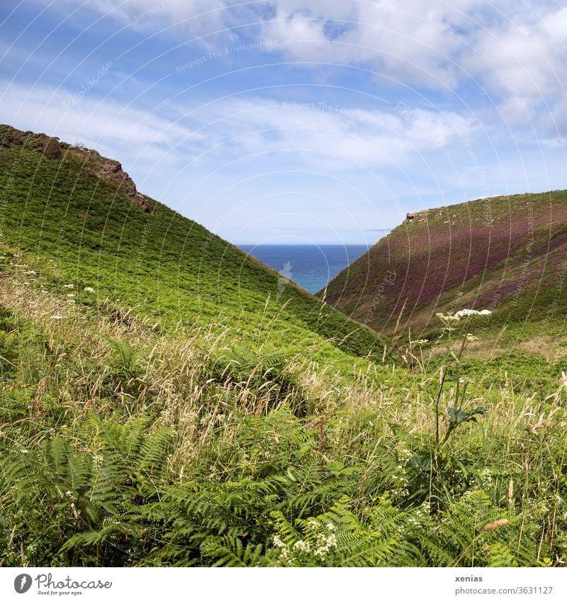 Ein Stück blaues Meer zwischen der grünen Landschaft unter schönem Himmel im sommerlichen Cornwall Wiese Küste Gras Farn Aussicht Ferien & Urlaub & Reisen
