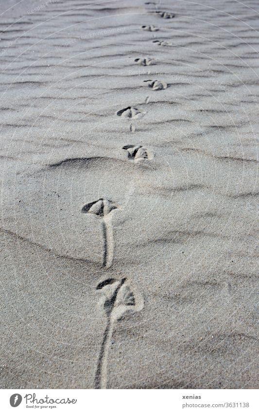 Vogelspuren im Sand Strand Tierspuren Möwe Möwenspur Küste Spuren Natur Gedeckte Farben