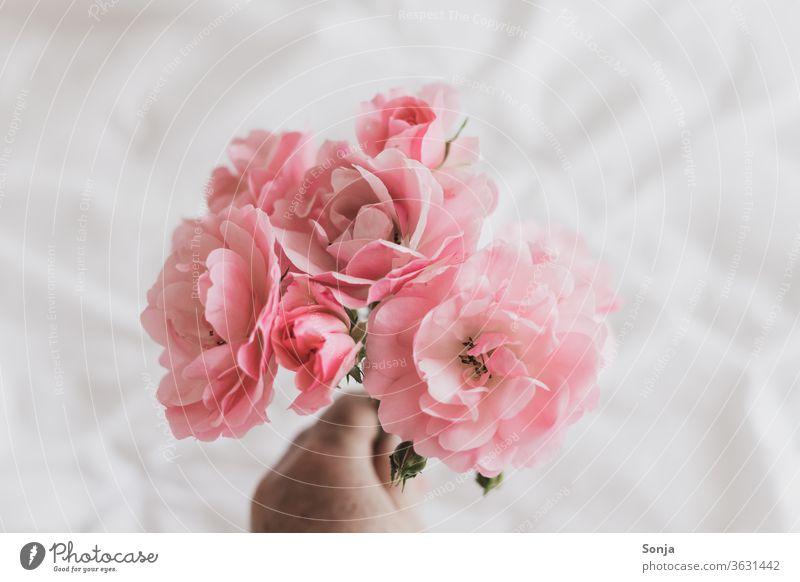 Hand hält rosa Rosen auf einer weißen Bettdecke Blume Blüte Nahaufnahme Sommer Duft Blühend Blumenstrauß Liebe Geschenk Geburtstag Valentinstag Muttertag Stil