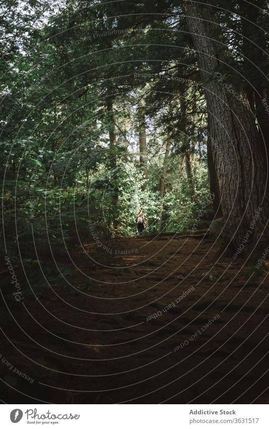 Rucksacktourist im grünen Wald Frau Weg Nachlauf Natur reisen Spaziergang Wälder Route Backpacker Reise Tourismus Abenteuer Algonquin PP Kanada Ontario Baum