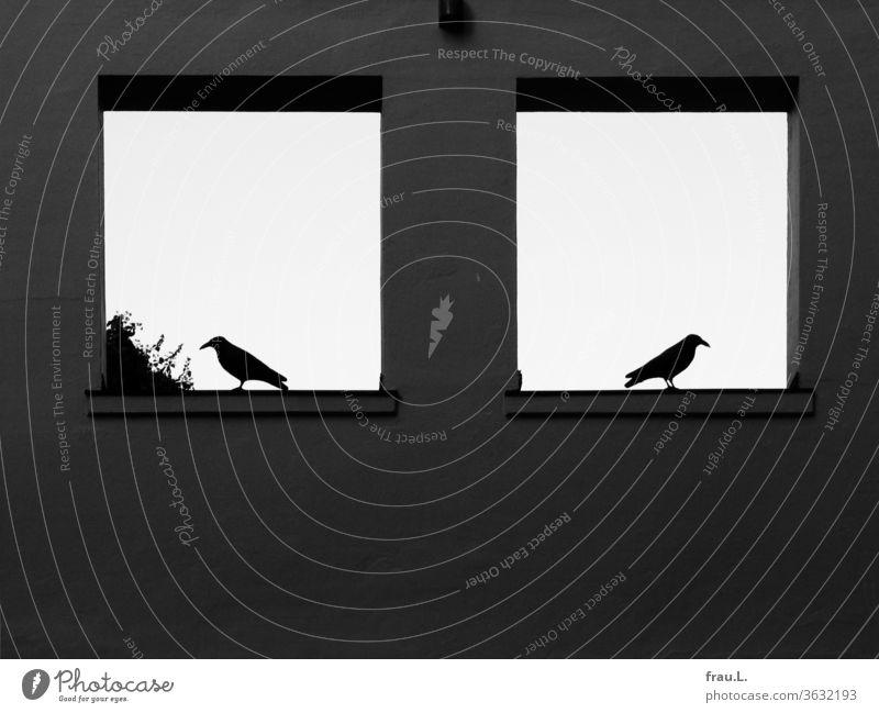 In den Fenstern zum Himmel hatten sich die beiden Krähen voneinander abgewandt. Wand Vögel Mauer Tag Gebäude